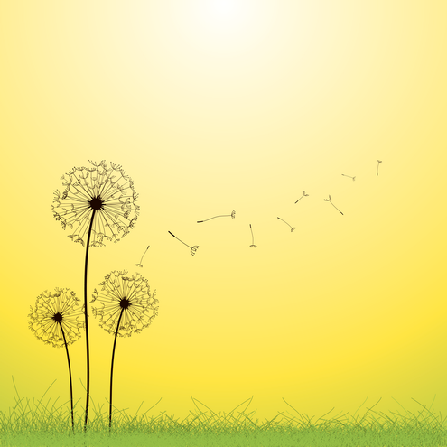 _vector-dandelion-vector-preview-by-dragonart