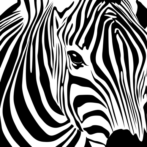 Detail of zebra head in different colors. See all previews further ...